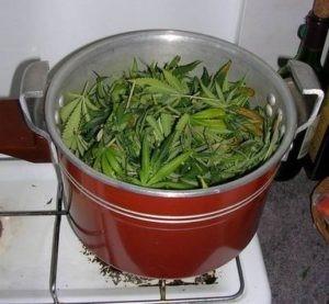 On rince les feuilles de cannabis